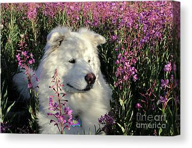 Dog Lovers Canvas Prints