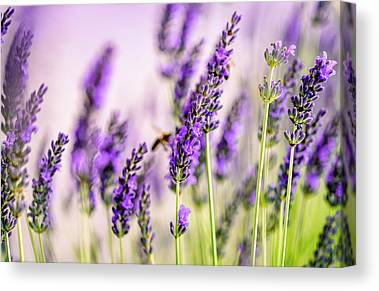 Honeybees Canvas Prints