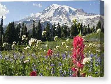 Terrain Canvas Prints