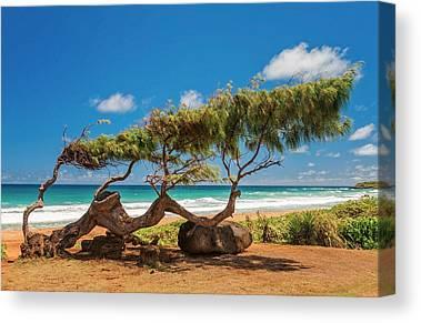 Wind Blown Tree Canvas Prints