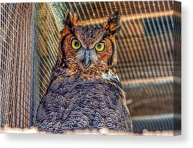 Designs Similar to Kilalla The Great Horned Owl