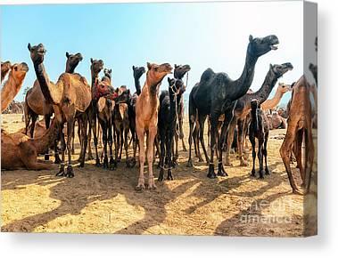 Berber Canvas Prints
