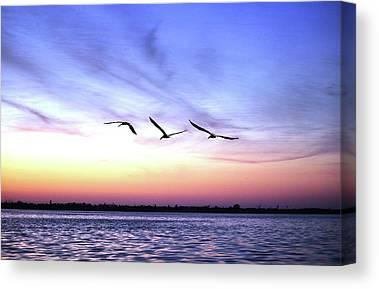 Pelican Island National Wildlife Refuge Canvas Prints