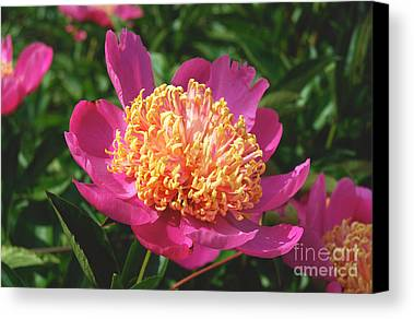 Peony Digital Art Limited Time Promotions