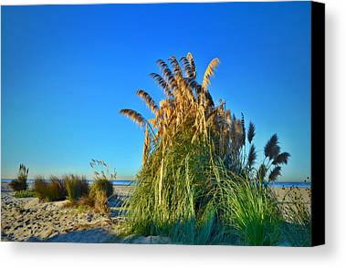 Sea Oats Limited Time Promotions