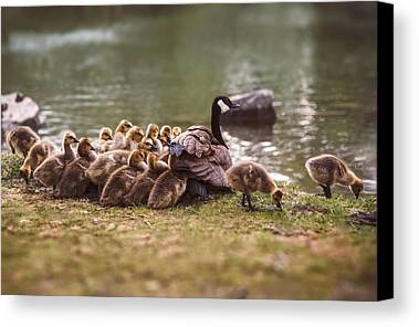Gosling Photographs Limited Time Promotions