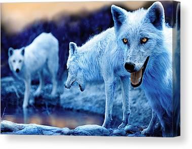 Arctic Wolf Photographs Canvas Prints