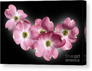 Cornus Canvas Prints