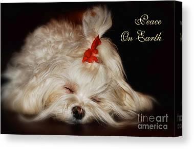 Maltese Dog Christmas Cards Canvas Prints