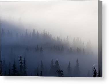 Pine Forest Canvas Prints