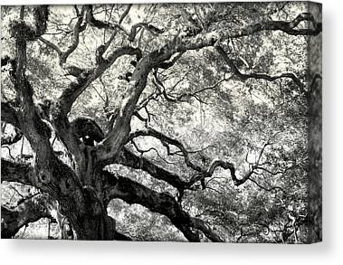 Reaching For Heaven Canvas Prints