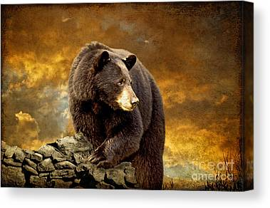 Brown Bear Canvas Prints