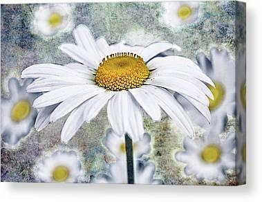 Marguerite Flowers Canvas Prints