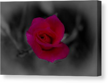 Pinks And Purple Petals Digital Art Canvas Prints