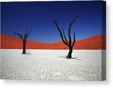 Namib Desert Canvas Prints
