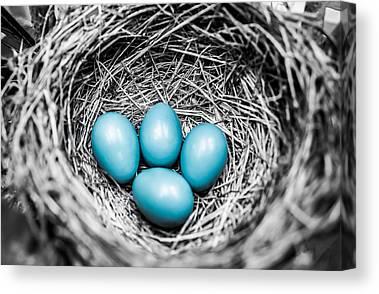 Eggs Photographs Canvas Prints