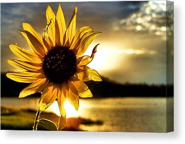Sun Photographs Canvas Prints