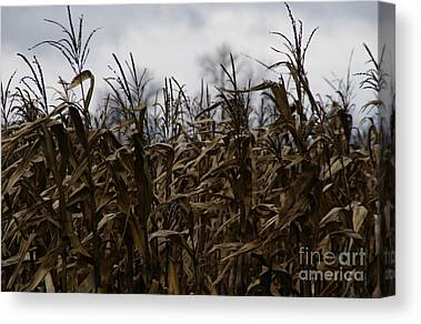 Cornfields Canvas Prints