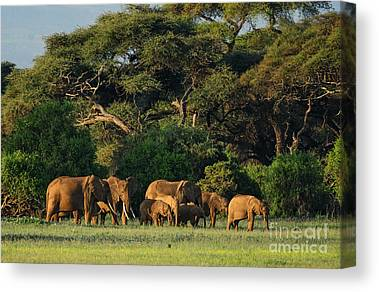 Equatorial Africa Canvas Prints