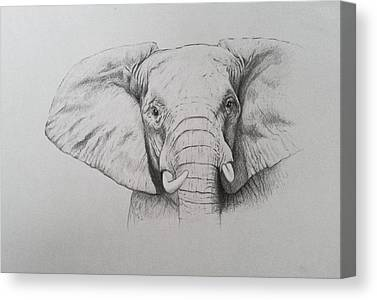 Elephants Drawings Canvas Prints