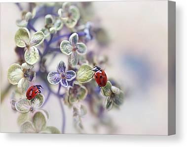 Lady Bug Canvas Prints