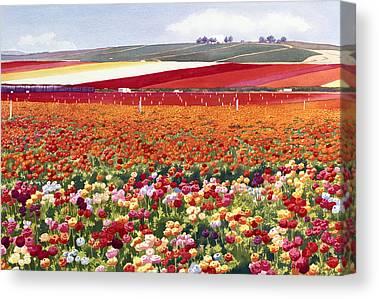Ranunculus Canvas Prints