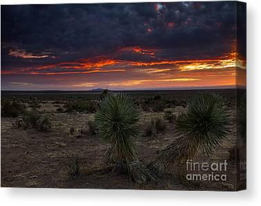 Yucca Elata Canvas Prints
