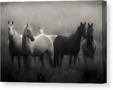 Horse Photographs Canvas Prints