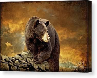Brown Bear Canvas Prints