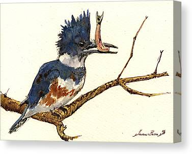 Belted Kingfisher Canvas Prints