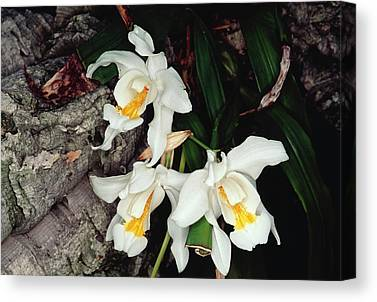 Epiphytic Canvas Prints