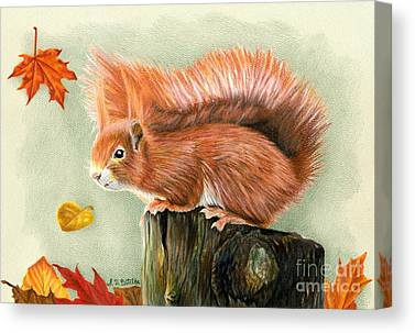 Pine Squirrel Canvas Prints
