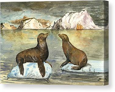 Sea Lions Canvas Prints