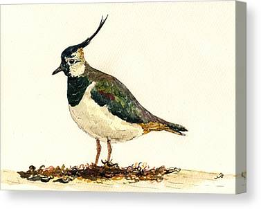Lapwing Canvas Prints