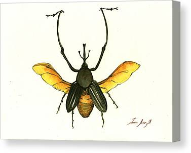 Beetle Canvas Prints