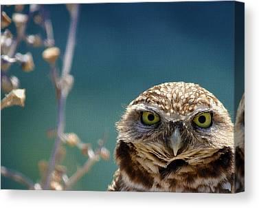 Burrow Owl Canvas Prints