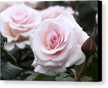 Romantic Garden Photographs Limited Time Promotions