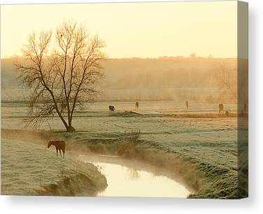 Cold Morning Sun Canvas Prints