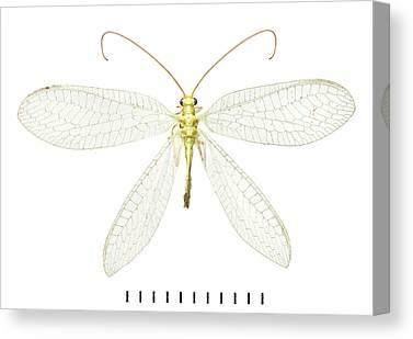 Invertebrata Canvas Prints
