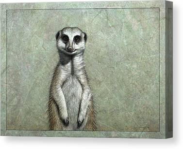 Meerkats Canvas Prints