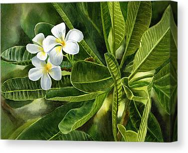 Fragipani Canvas Prints