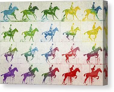 Warmblood Horse Canvas Prints