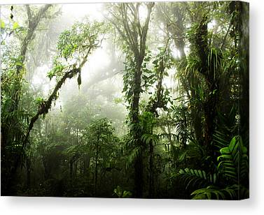 Monteverde Canvas Prints