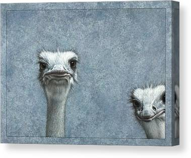 Ostrich Canvas Prints