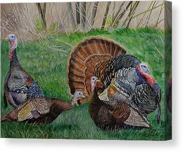 Eastern Wild Turkey Paintings Canvas Prints