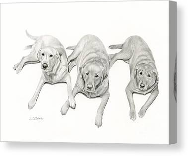 Pencil Drawings Of Pets Canvas Prints