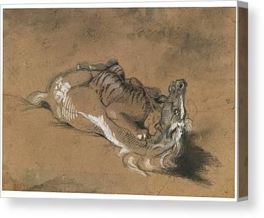Tiger Attacks A Horse Canvas Prints