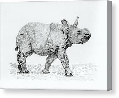 One Horned Rhino Drawings Canvas Prints