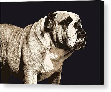 American Bulldog Canvas Prints