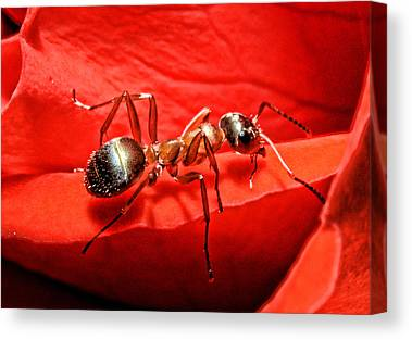 Ant Canvas Prints